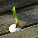 Какво е порастването и при какви условия се случва?