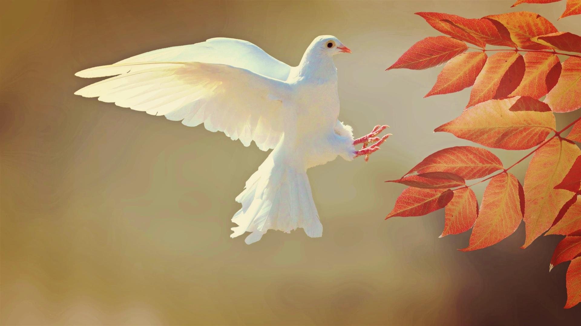 Някои духовни концепции и техният практически смисъл